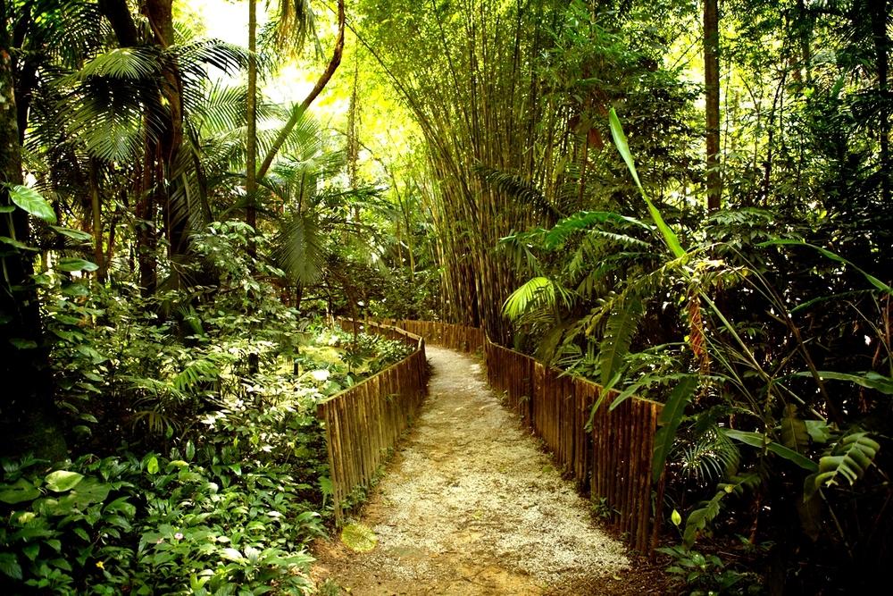 roberto-burle-marx-parque-burle-marx-trilha