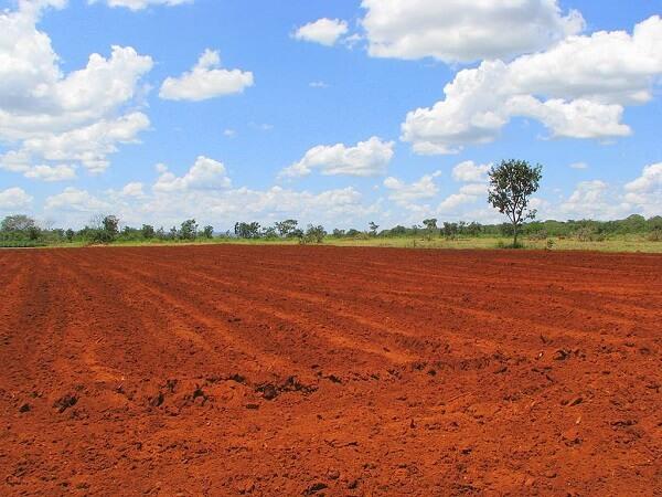 Tipos de solos: terra roxa ou avermelhada