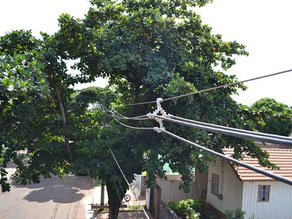Arborização urbana: árvore presa na fiação