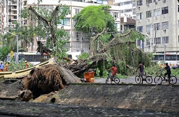 Arborização urbana: queda de árvore no Rio de Janeiro