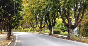 arborizacao-urbana