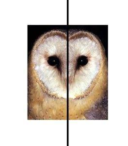 Simetria bilateral: coruja