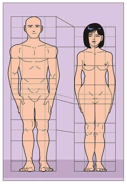 Simetria no corpo humano