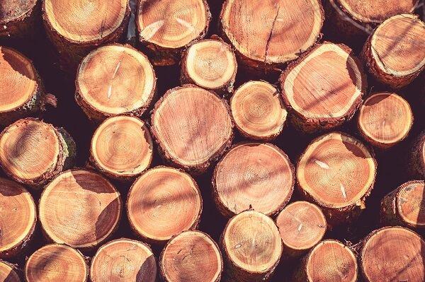 Madeira de lei: troncos de pau-brasil