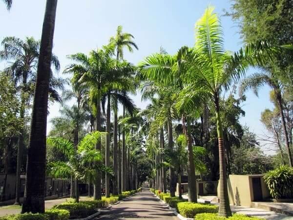 Quinta da Boa Vista: Paisagismo no Zoológico da Quinta da Boa Vista