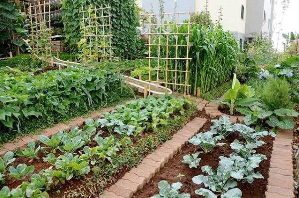 Hortas Urbanas: exemplo de horta urbana