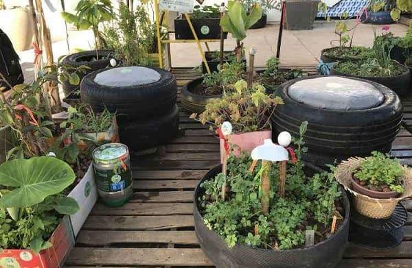 Hortas Urbanas: horta urbana com pneus e latas