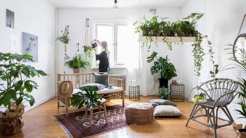 Urban Jungle: cliente precisa ter rotina de cuidados com as plantas
