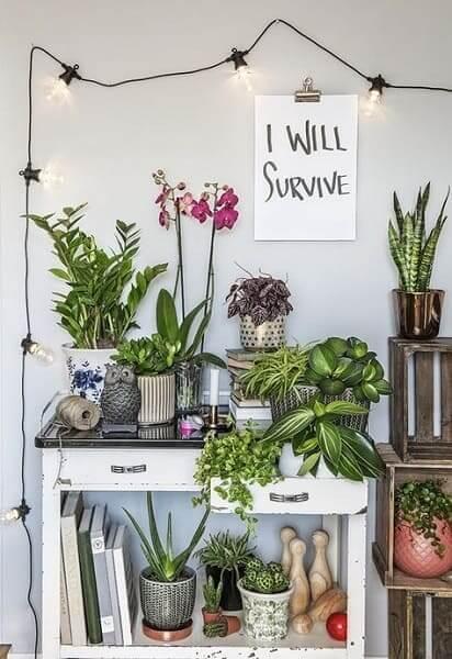 Urban Jungle: iluminação realça composição de plantas (foto: Pinterest)