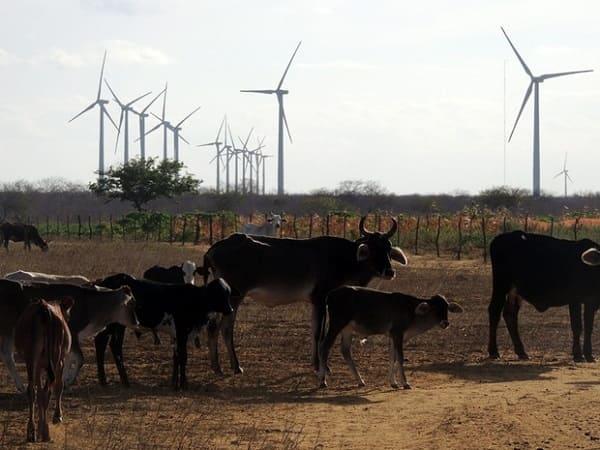 Energia eólica: povoado de João Câmara com aerogeradores