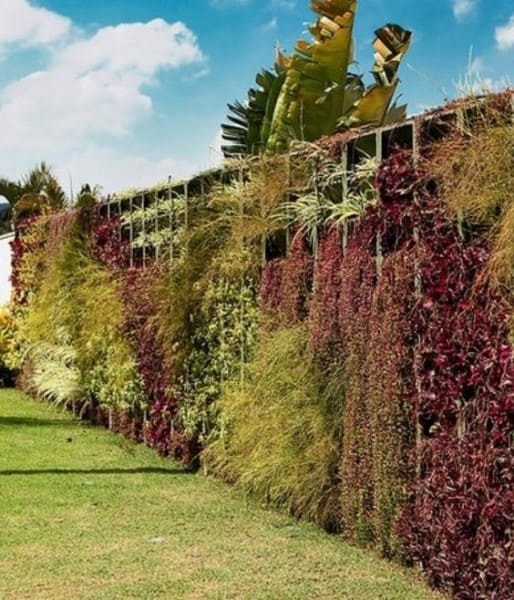 Muro verde em jardim (foto: Pinterest)