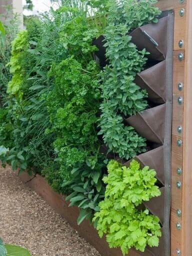 Muro verde sistema de módulos também pode ser usado para a criação de hortas verticais (foto: Pinterest)