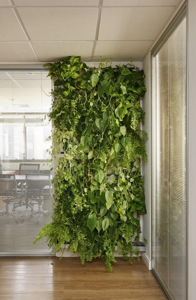A construção de paredes verdes também é muito usado no design biofílico. Projeto de ArqDesign