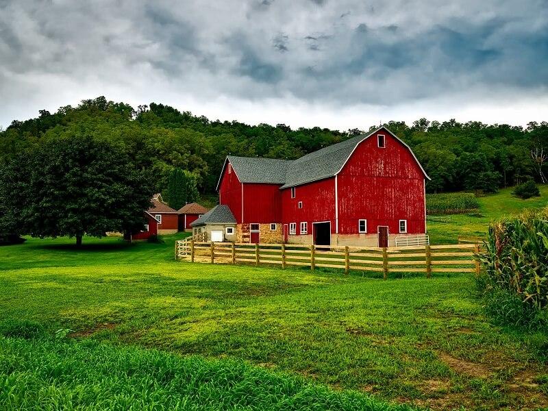 Atividades sobre paisagem rural e urbana: espaços verdes com árvores, plantações, criação de animais são alguns dos elementos que compõem a paisagem rural. Fonte: Pixabay